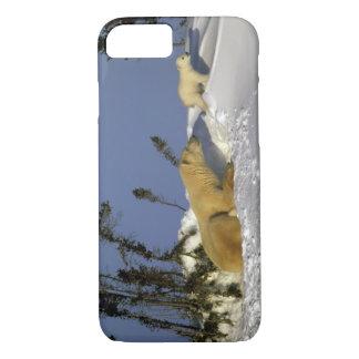North America, Canada, Manitoba, Churchill. 5 iPhone 8/7 Case