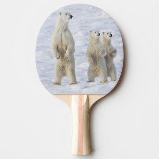 North America, Canada, Manitoba, Churchill. 5 Ping Pong Paddle