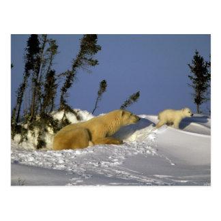 North America, Canada, Manitoba, Churchill. 5 Postcard
