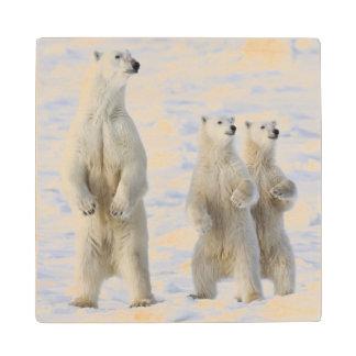 North America, Canada, Manitoba, Churchill. 5 Wood Coaster