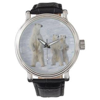 North America, Canada, Manitoba, Churchill. 5 Wristwatch