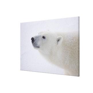 North America, Canada, Manitoba, Churchill. 6 Stretched Canvas Print