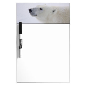 North America, Canada, Manitoba, Churchill. 6 Dry Erase Board