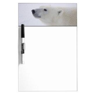 North America, Canada, Manitoba, Churchill. 6 Dry Erase White Board