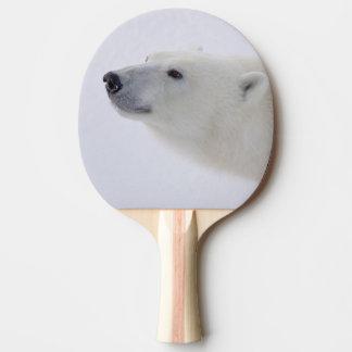 North America, Canada, Manitoba, Churchill. 6 Ping Pong Paddle