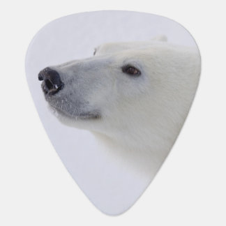 North America, Canada, Manitoba, Churchill. 6 Plectrum