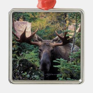 North America, Canada, Nova Scotia, Cape Breton Christmas Ornament