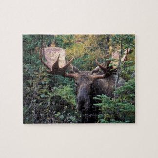 North America, Canada, Nova Scotia, Cape Breton Jigsaw Puzzle