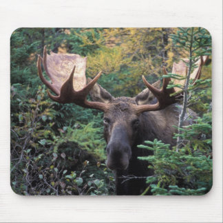 North America, Canada, Nova Scotia, Cape Breton Mouse Mat