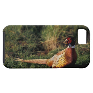 North America, Canada, Nova Scotia, Eastern 2 iPhone 5 Cover