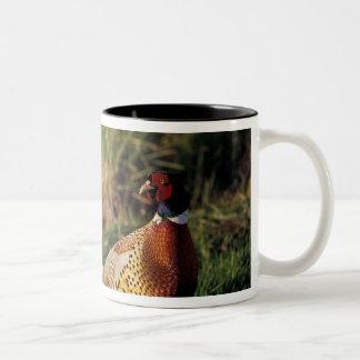 North America, Canada, Nova Scotia, Eastern 2 Two-Tone Coffee Mug