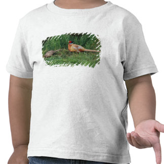 North America, Canada, Nova Scotia, Eastern 3 T Shirts