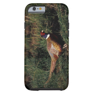 North America, Canada, Nova Scotia, Eastern Tough iPhone 6 Case