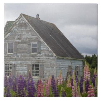 North America, Canada, Prince Edward Island, Tile