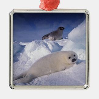 North America, Canada, Quebec, Iles de la 2 Christmas Ornament