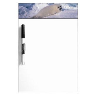 North America, Canada, Quebec, Iles de la 2 Dry Erase Whiteboards