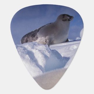 North America, Canada, Quebec, Iles de la 2 Guitar Pick
