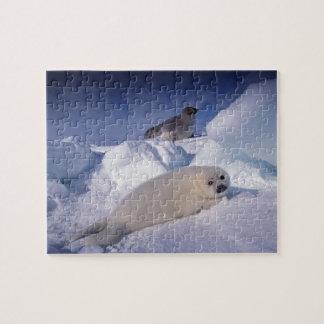 North America, Canada, Quebec, Iles de la 2 Jigsaw Puzzle