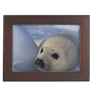 North America, Canada, Quebec, Iles de la 2 Keepsake Box