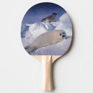 North America, Canada, Quebec, Iles de la 2 Ping Pong Paddle