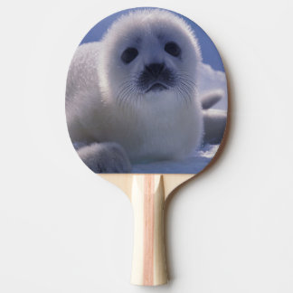 North America, Canada, Quebec, Iles de la Ping Pong Paddle