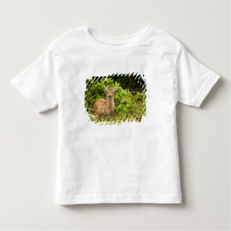 North America, Canada, Queen Charlotte 2 Toddler T-Shirt