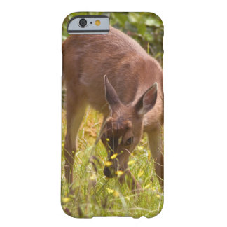North America, Canada, Queen Charlotte Barely There iPhone 6 Case
