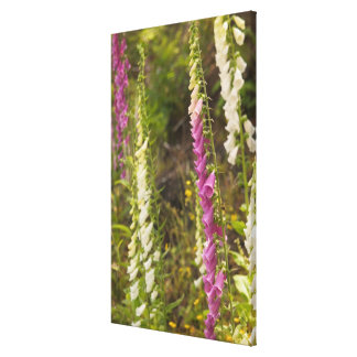 North America, Canada, Queen Charlotte Islands, 2 Stretched Canvas Print
