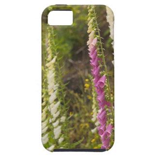 North America, Canada, Queen Charlotte Islands, 2 iPhone 5 Case