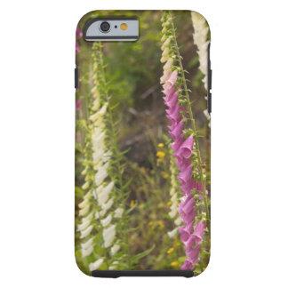 North America, Canada, Queen Charlotte Islands, 2 Tough iPhone 6 Case