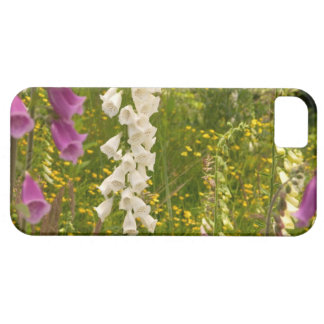 North America, Canada, Queen Charlotte Islands, 5 Case For The iPhone 5