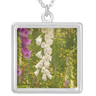 North America, Canada, Queen Charlotte Islands, 5 Necklace