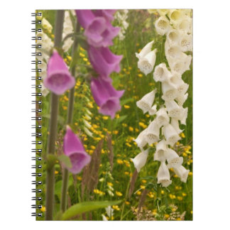 North America, Canada, Queen Charlotte Islands, 5 Spiral Notebook
