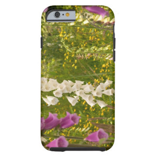 North America, Canada, Queen Charlotte Islands, 5 Tough iPhone 6 Case