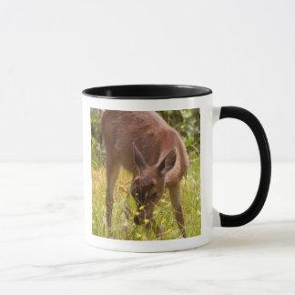 North America, Canada, Queen Charlotte Mug