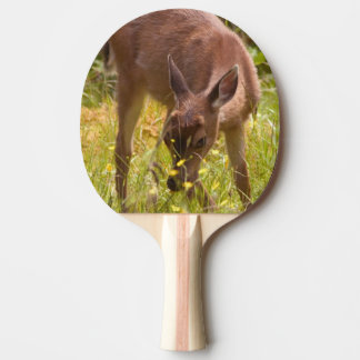 North America, Canada, Queen Charlotte Ping Pong Paddle
