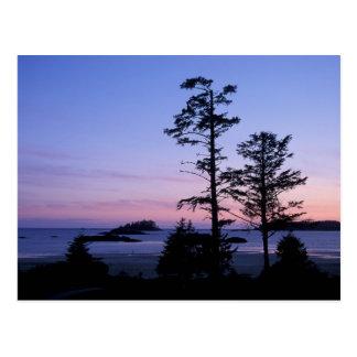 North America, Canada, Vancouver Island, trees Postcard
