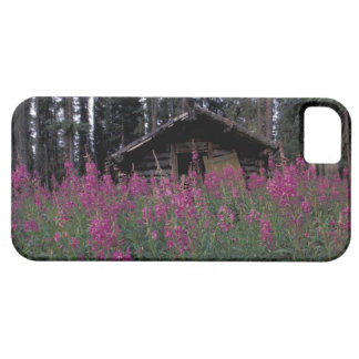 North America, Canada, Yukon. Abandoned trappers Case For The iPhone 5