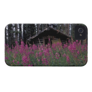 North America, Canada, Yukon. Abandoned trappers iPhone 4 Cover