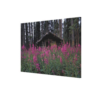 North America, Canada, Yukon. Abandoned trappers Stretched Canvas Print
