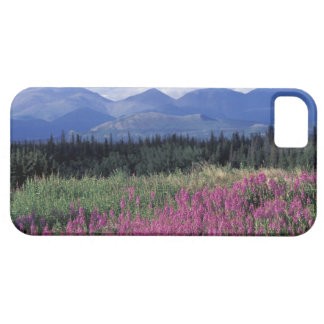 North America, Canada, Yukon. Fireweed blooms iPhone 5 Cover