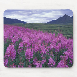 North America, Canada, Yukon. Fireweed blooms Mouse Pad
