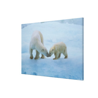 North America, Canadian Arctic. Polar bear and Canvas Print