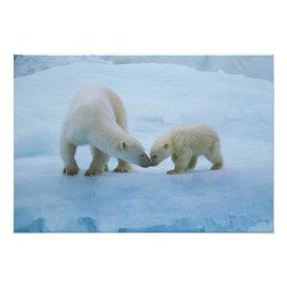 North America, Canadian Arctic. Polar bear and Photo Print