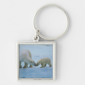 North America, Canadian Arctic. Polar bear and Silver-Colored Square Key Ring
