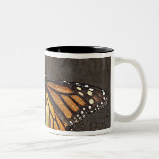 North America, Mexico, Angangueo. An exhausted Two-Tone Coffee Mug