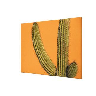 North America, Mexico, Baja California, Cabo Canvas Print