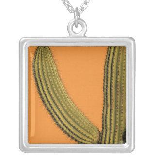 North America, Mexico, Baja California, Cabo Silver Plated Necklace