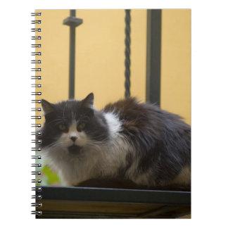 North America, Mexico, San Miguel de Allende. Spiral Notebook