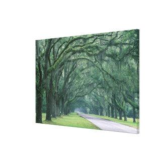 North America, U.S.A., Georgia, Savannah, Canvas Print